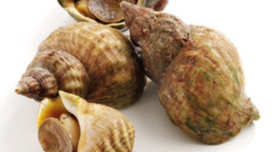 Fresh Whelks with Shallots and Aioli